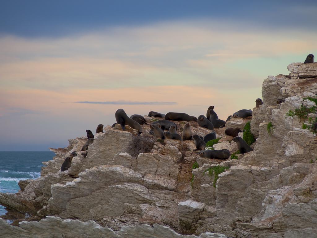 Kaikoura – Zwischen Robben, Wanderung auf der Peninsula